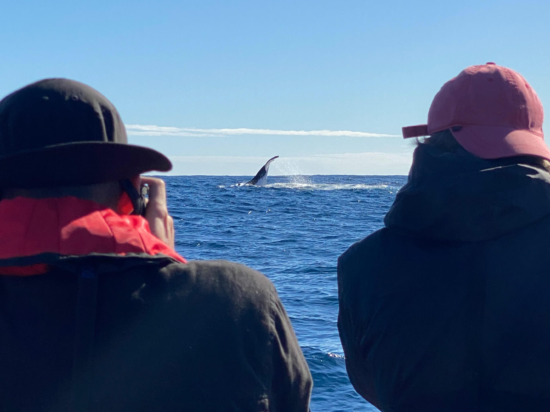 Cooly Eco Adventures - Whale watching Gold Coast Tweed Heads
