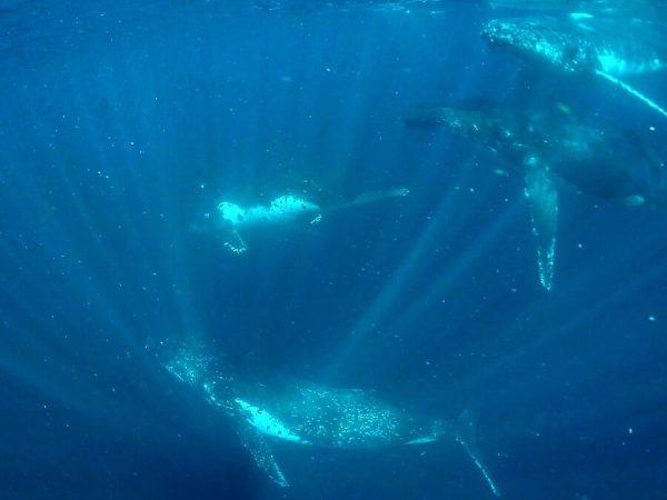 Swim with whales Coolangatta Gold Coast