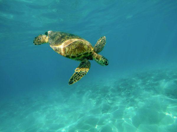 Swim with Turtles Gold Coast