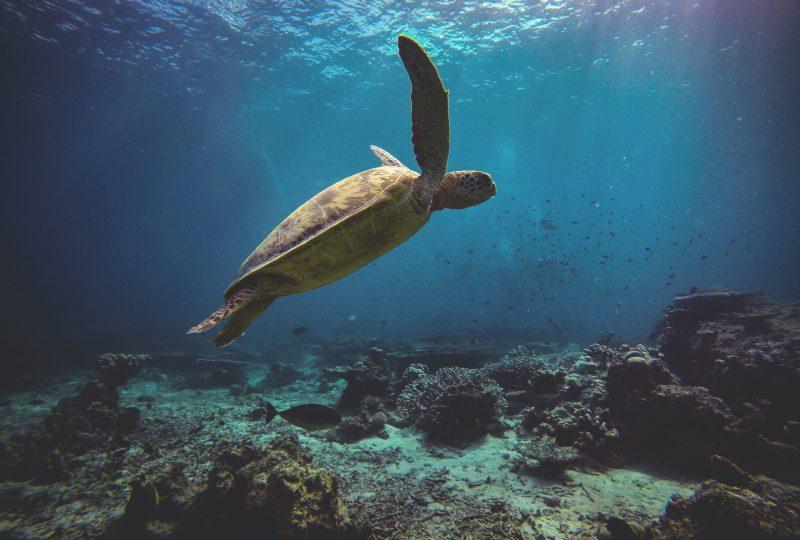 swim with turtles near me